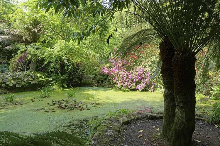 [Trengwainton Garden #3]