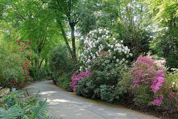[Trengwainton Garden #4]
