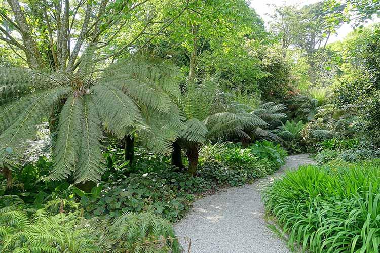 [Trengwainton Garden #5]