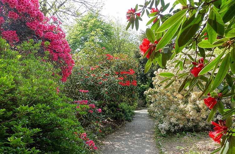 [Trengwainton Garden #6]