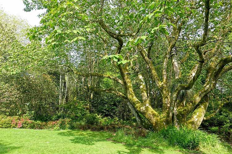 [Trengwainton Garden #7]
