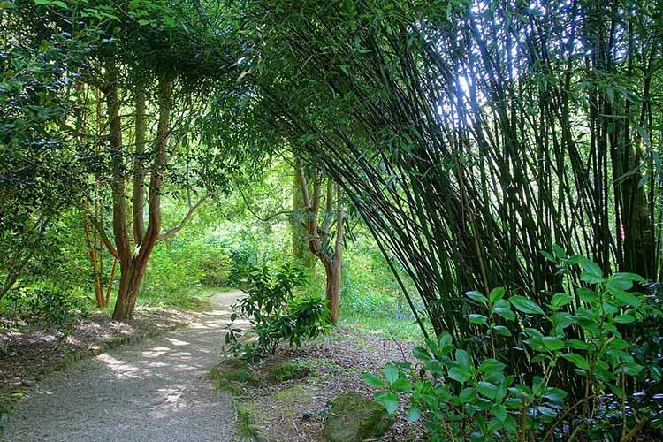 [Trengwainton Garden #8]