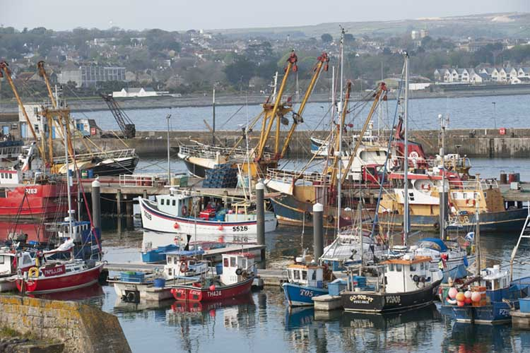 [Newlyn - Fishing Boats in the Harbour]