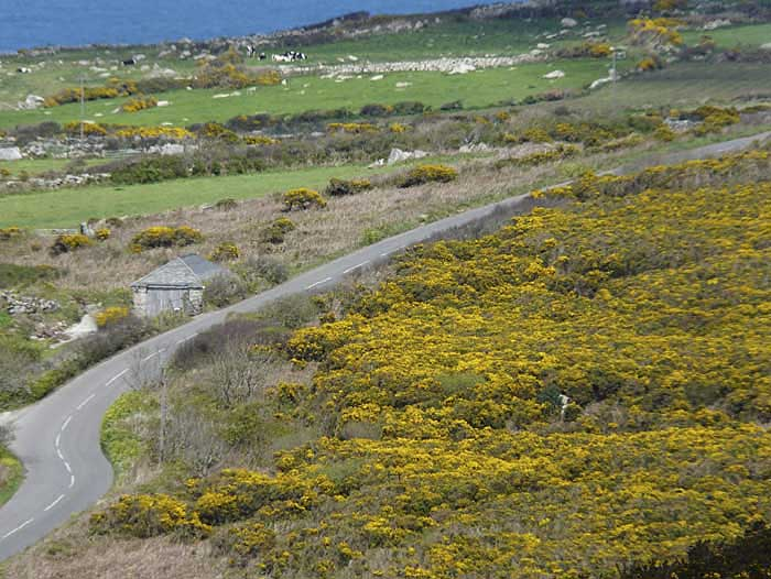 [Coast Road with Gorse]