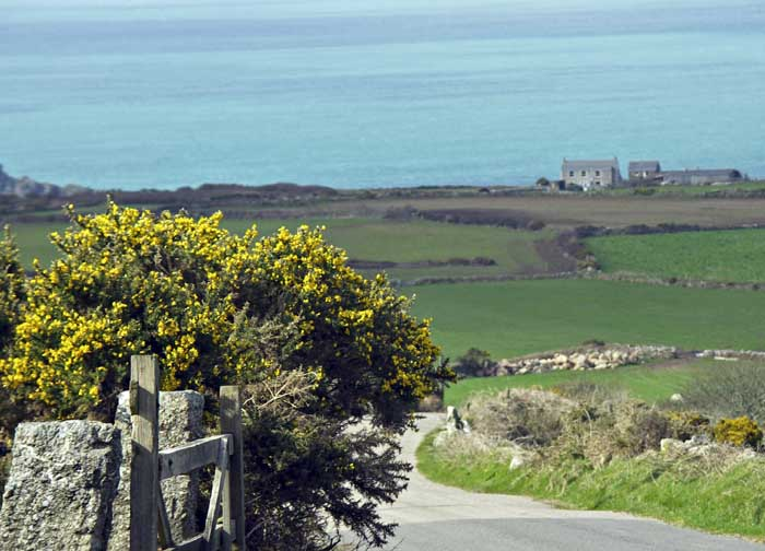 [down Trewey Hill, Zennor]